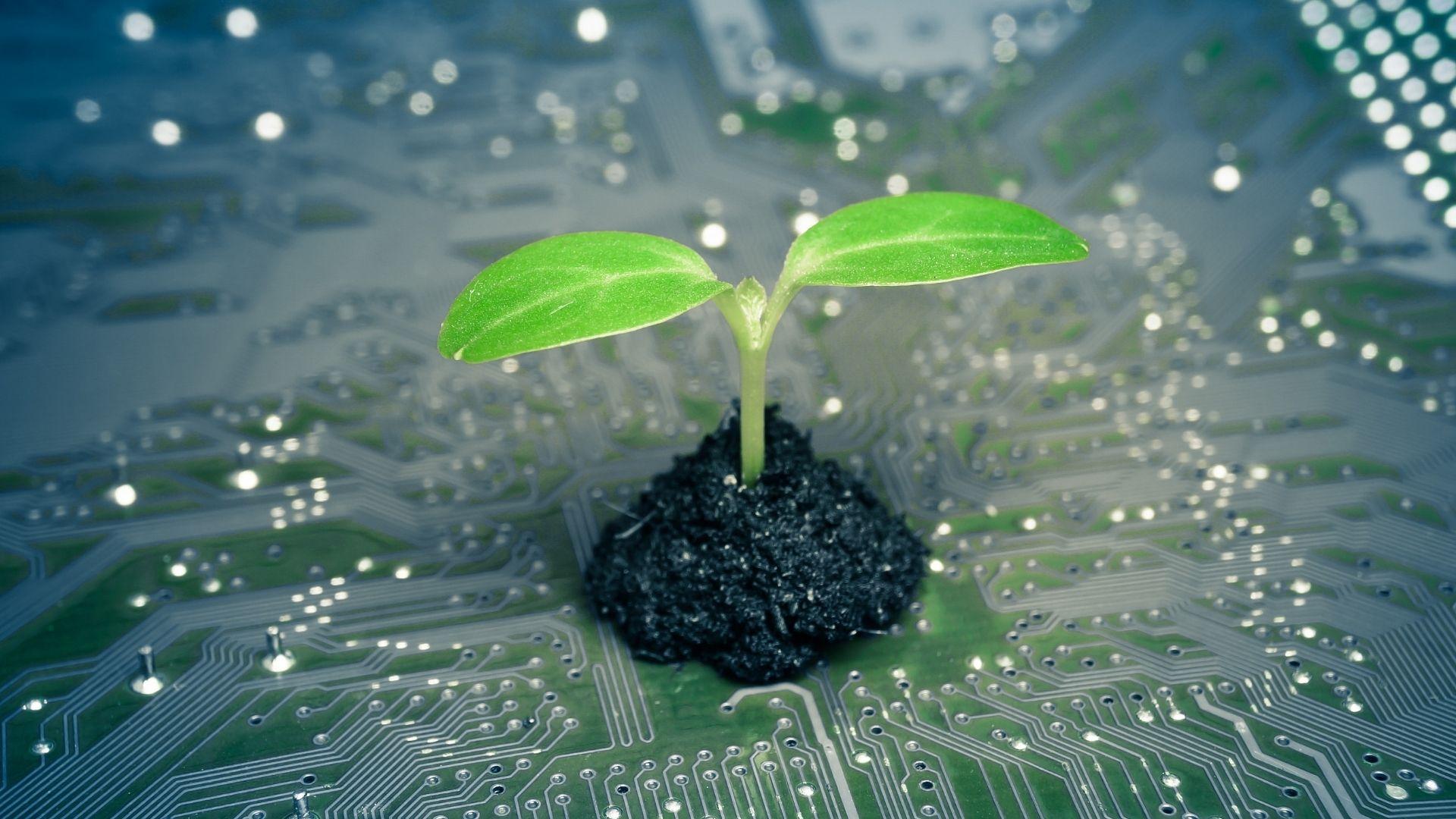 3 soluzioni Green IT 2021 per un'azienda più sostenibile